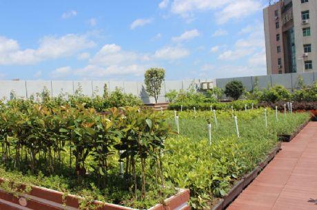 朗汀和记电讯澳门——屋顶绿化案例